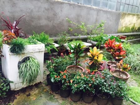 Greened to Perfection – Creative Gardening at its best [ Home Decor ]