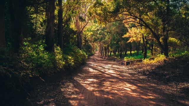 Kodachadri-a journey in verse! [ Guestpost ]